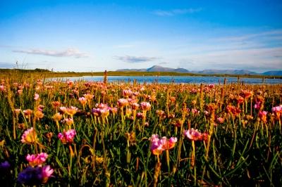 Mulranny's Rare Machair Plain